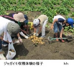 ジャガイモ収穫体験の様子